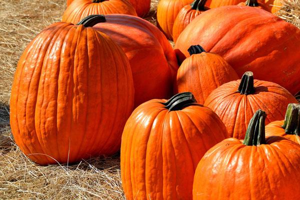 Pumpkin Patch October Fest at Wilderness Presidential Resort